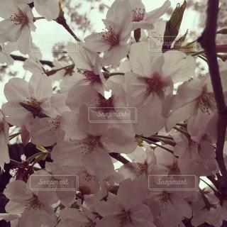 春 - No.115966