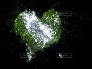 森の中のハートの写真・画像素材[3030506]