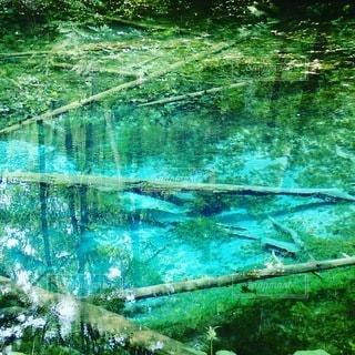 透き通ったエメラルドグリーンの池の写真・画像素材[3038581]