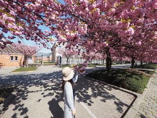 桜を見にお散歩の写真・画像素材[3120903]
