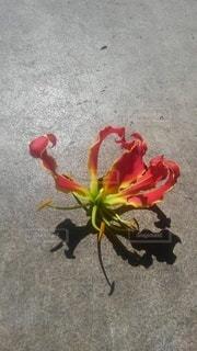 花のクローズアップの写真・画像素材[3013131]