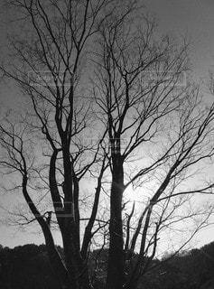木のクローズアップの写真・画像素材[3052374]