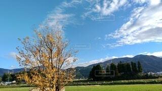 背景に山がある木の写真・画像素材[3871493]