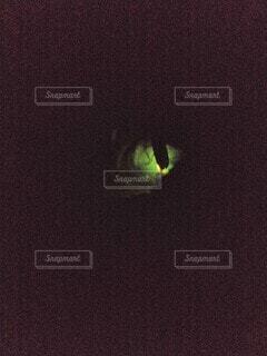 葉陰の蛍の光の写真・画像素材[4566272]