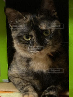 猫のクローズアップの写真・画像素材[3013458]
