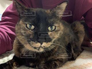 横になってカメラを見ている猫の写真・画像素材[3015633]