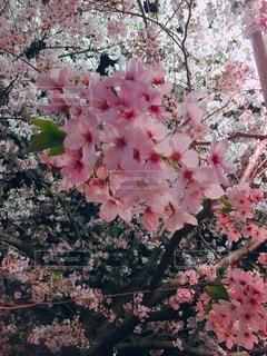 花のクローズアップの写真・画像素材[3013927]