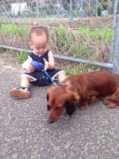 犬を連れた小さな男の子の写真・画像素材[3026842]