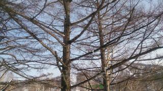 自然の写真・画像素材[125788]