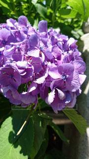 花の写真・画像素材[141528]