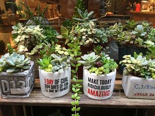 カフェのマルシェで並んだ多肉植物の写真・画像素材[1145756]