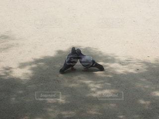 仲のいい鳩二羽の写真・画像素材[1151102]
