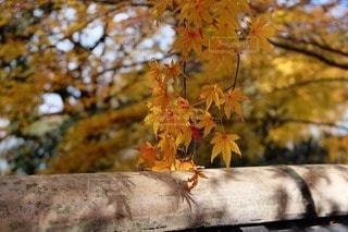 自然の写真・画像素材[117249]