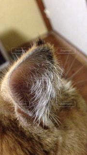 猫の写真・画像素材[121638]
