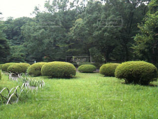 公園の写真・画像素材[121973]