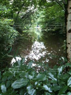 森林の写真・画像素材[121974]