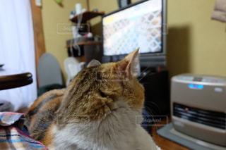 猫の写真・画像素材[122345]