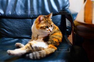 猫の写真・画像素材[122348]