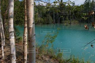 自然の写真・画像素材[379763]