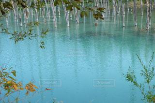 自然の写真・画像素材[379768]