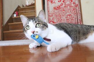 猫の写真・画像素材[3015117]