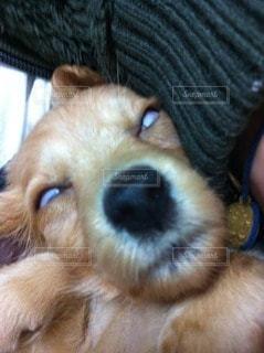 犬の写真・画像素材[116453]