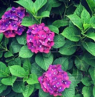 自然の写真・画像素材[116543]