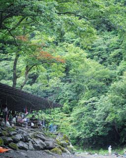 森の人々 のグループの写真・画像素材[823172]