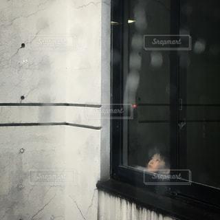 ドアの上に座っている猫の写真・画像素材[823177]