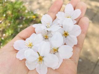 花を持つ手の写真・画像素材[3019186]