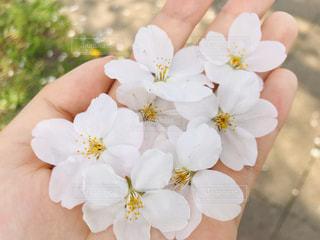 花を持つ手の写真・画像素材[3019188]