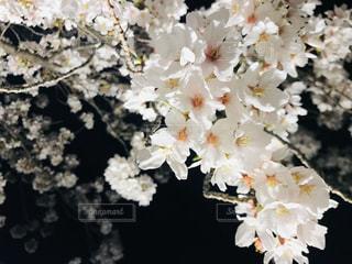 花のクローズアップの写真・画像素材[3019216]