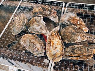 牡蠣の写真・画像素材[3019735]