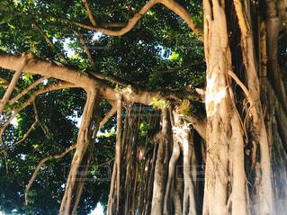 木の写真・画像素材[3020047]