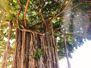 木の写真・画像素材[3020050]