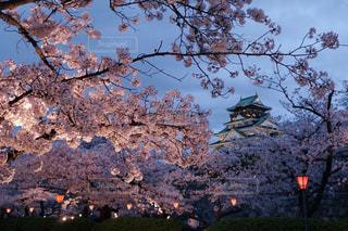 大阪城と夜桜の写真・画像素材[3023746]