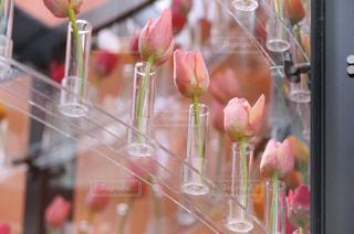 花のクローズアップの写真・画像素材[3032244]