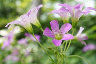花のクローズアップの写真・画像素材[3037732]