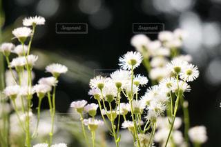 花のクローズアップの写真・画像素材[3037739]