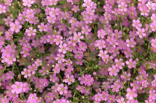 花のクローズアップの写真・画像素材[3038192]