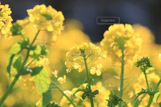 花のクローズアップの写真・画像素材[3042702]