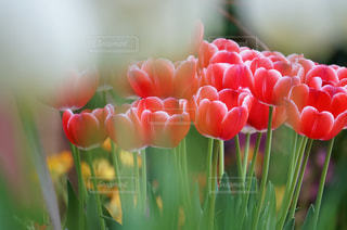 花のクローズアップの写真・画像素材[3073120]