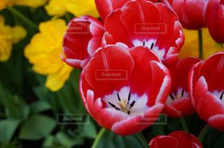 花のクローズアップの写真・画像素材[3073123]