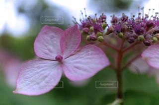 花のクローズアップの写真・画像素材[3074830]