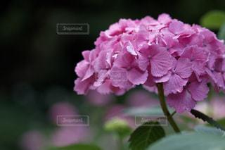 花のクローズアップの写真・画像素材[3074839]