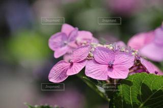 花のクローズアップの写真・画像素材[3074844]