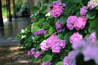 花園のクローズアップの写真・画像素材[3074880]