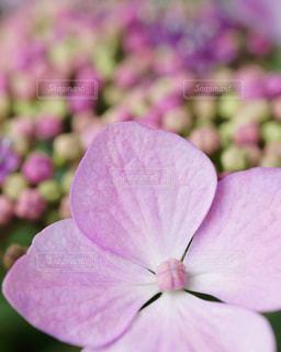 花のクローズアップの写真・画像素材[3074868]
