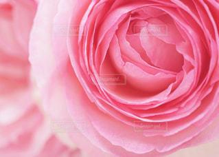 花のクローズアップの写真・画像素材[3074873]