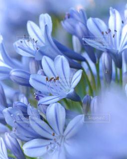 花のクローズアップの写真・画像素材[3075121]